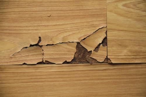 Can Mold Grow Under Laminate Flooring?